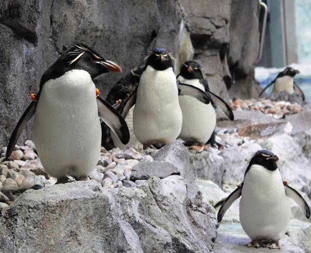 Penguin Conservative